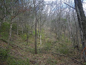 Westside Ravine After Buckthorn Blitz