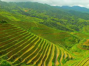 "A Longji terrace in Longsheng county, Guilin, China by Anna Frodesiak from WikimediaCommons.<a href=""/reason/images/338100_orig.jpg"" title=""High res"">∝</a>"