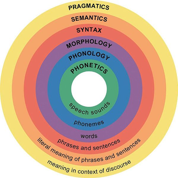 The major levels of linguistic structure.