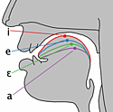 Cardinal vowel tongue position, front; from Wikimedia Commons