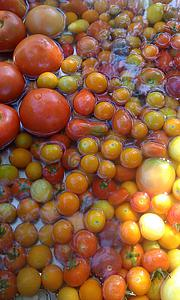 "Heirloom tomatoes from Luther Gardens<a href=""/reason/images/368146_orig.jpg"" title=""High res"">∝</a>"