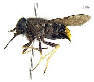 Beyonce Horse Fly (Exhibit B)