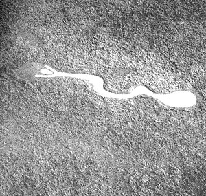 Aerial photograph of the limed serpent intaglio in Lyons, Kansas. Photograph by Walt Ellis, in