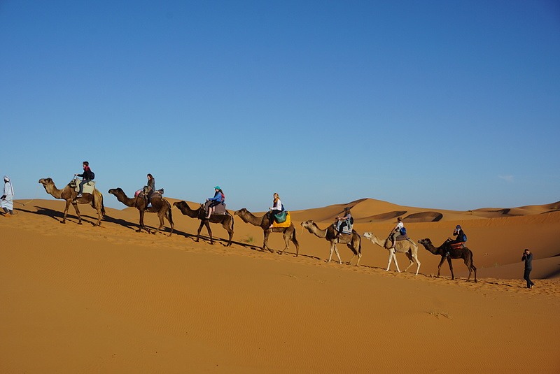 Luther students ride in a camel caravan.