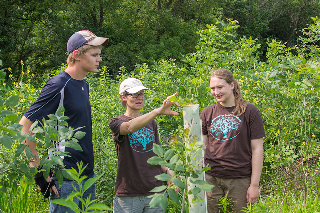 Assistant professor of biology and land manager Molly McNicoll (center) and student interns Brennen Reysack '16 and Marissa Wales '17 assess the growth of an oak tree planted as part of a 14-acre bottomland forest restoration along the Upper Iowa River.