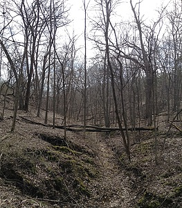 Hickory Ridge Woods, Sunday