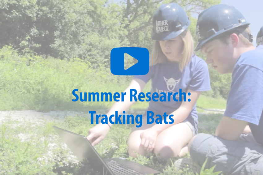 Tracking Bats video image