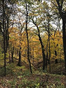 Beautiful view of the yellow trees on the trails behind Dunning Springs