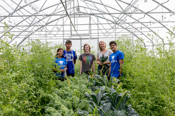 "Iju Regmi, Thawdar Zin, Jane Clare, Toby Cain and Bishal Parajuli worked to harvest food from the gardens to use in the Luther cafeteria.<a href=""/reason/images/877038_orig.jpg"" title=""High res"">&prop;</a>"