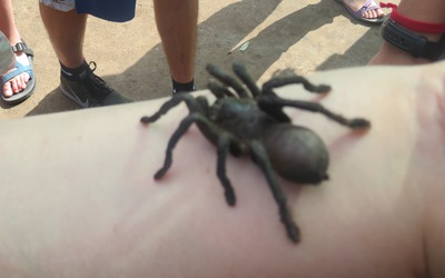 A tarantula crawls on a student's arm before becoming a tasty treat.