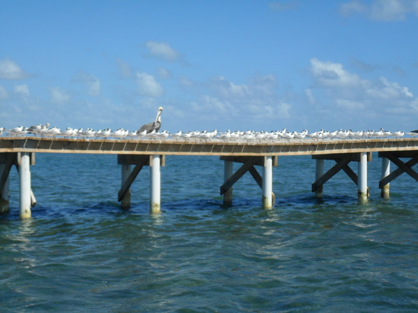 "Just some birds chilling on a pier.<a href=""/reason/images/743071_orig.jpg"" title=""High res"">∝</a>"