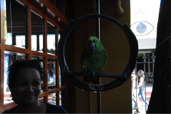 "Paco, the parrot at the hotel, first attempted to bite (Professor) Rita's hair, then imitated our laughter when we saw what happened.<a href=""/reason/images/740090_orig.png"" title=""High res"">∝</a>"