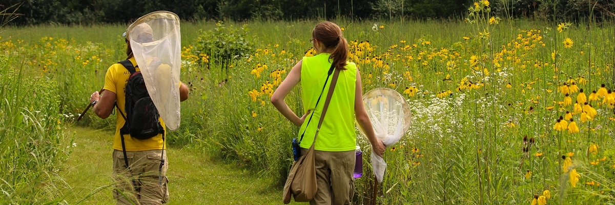 Summer research students conducting a butterfly survey in the Decorah Community Prairie