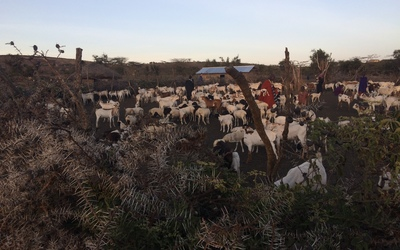 "The ""kraal"" of animals within the boma"