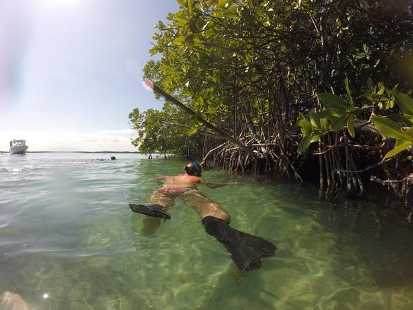 "Sophie snorkeling by some mangroves.<a href=""/reason/images/600182_orig.jpg"" title=""High res"">∝</a>"