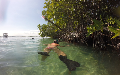 Sophie snorkeling by some mangroves.