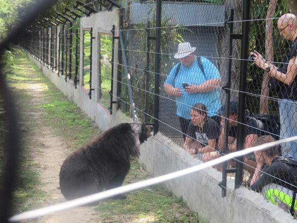 "Luther students get up close and personal with Lily, one of the bears at Free the Bear sanctuary.<a href=""/reason/images/739276_orig.jpg"" title=""High res"">∝</a>"