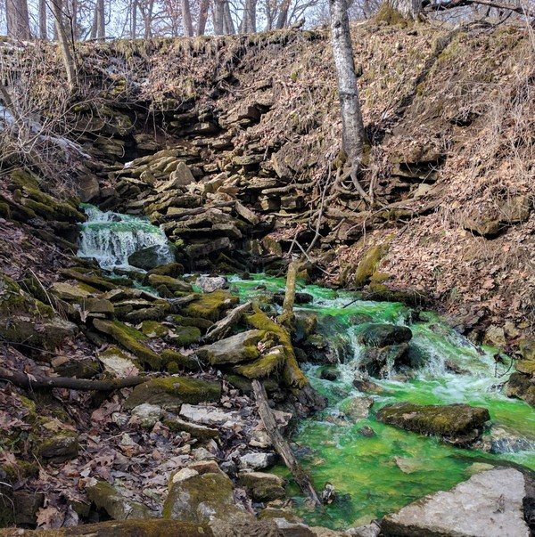 A stream runs bright green as (non-toxic) dye added to a sinkhole reaches a cold water spring in NE Iowa.