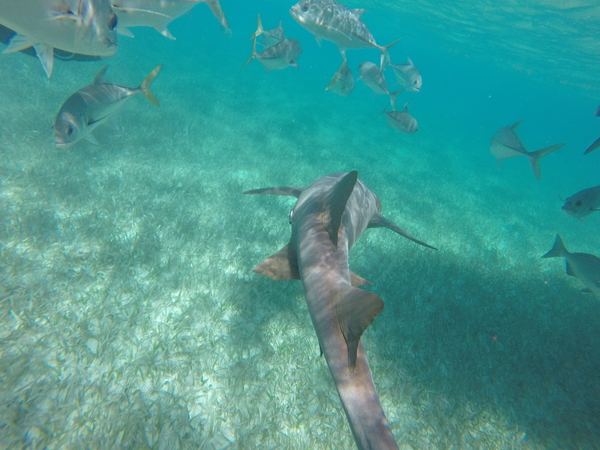 "A large nurse shark!<a href=""/reason/images/602330_orig.jpg"" title=""High res"">∝</a>"
