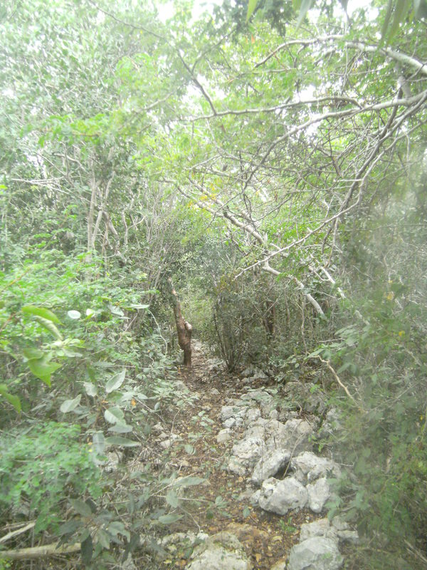 "The trail to the cave<a href=""/reason/images/523346_orig.jpg"" title=""High res"">&prop;</a>"