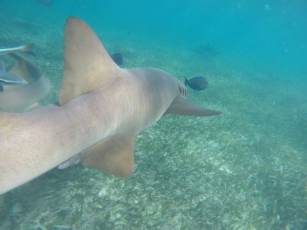 "a view of the seagrass from the side of a nurse shark.<a href=""/reason/images/800351_orig.jpg"" title=""High res"">∝</a>"