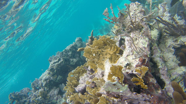 "Healthy patch reef, forefronted by Bladed Fire Coral.<a href=""/reason/images/670419_orig.jpg"" title=""High res"">∝</a>"
