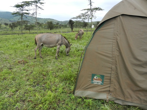"The donkeys, goats, and cows grazed alongside our tent.<a href=""/reason/images/675472_orig.jpg"" title=""High res"">∝</a>"