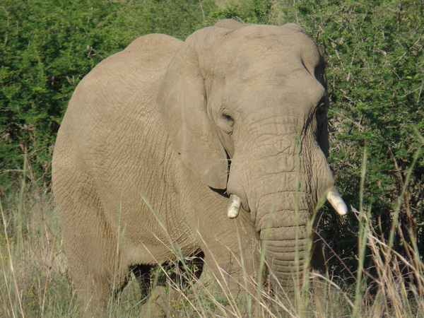 "Our friend, Gerald, the elephant<a href=""/reason/images/596482_orig.jpg"" title=""High res"">∝</a>"