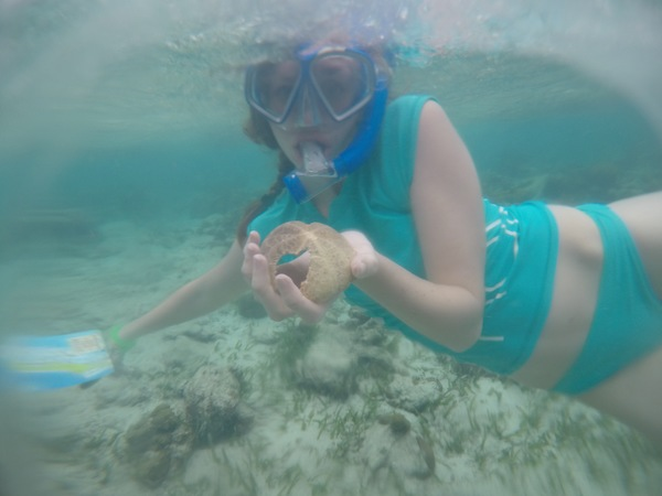 "Student Jessica Carpenter with the shell of a red heart urchin (Meoma ventricosa).<a href=""/reason/images/799504_orig.jpg"" title=""High res"">∝</a>"