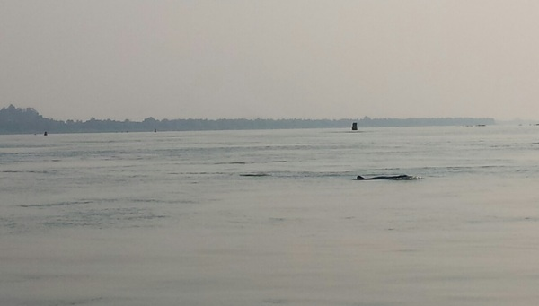"Freshwater dolphins!<a href=""/reason/images/598566_orig.jpg"" title=""High res"">∝</a>"
