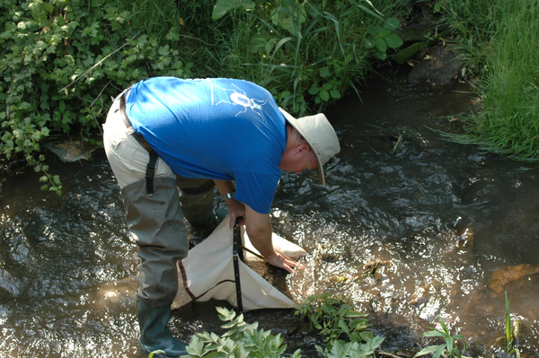 "Luther Biology Professor Kirk Larsen collects samples of macro invertebrates from the Twin Spring cold water stream.<a href=""/reason/images/384597_orig.jpg"" title=""High res"">∝</a>"