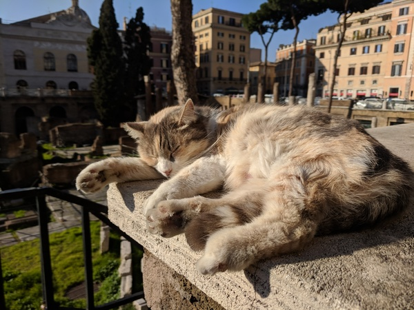 "Gatto Romano! Another stray cat basking in the sun.<a href=""/reason/images/801659_orig.jpg"" title=""High res"">∝</a>"