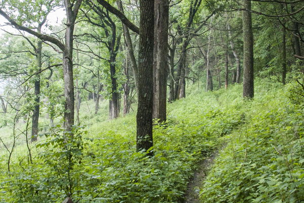 The trail system provides access to the natural areas, such as this trail in Hickory Ridge Woods.