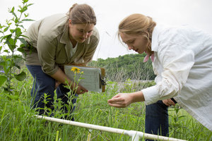 Students perform research outside during the summer for Dr. Molly McNicoll