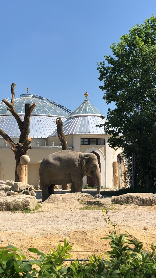 "Just an elephant at the Munich Zoo enjoying the sunshine too!<a href=""/reason/images/814923_orig.jpg"" title=""High res"">&prop;</a>"