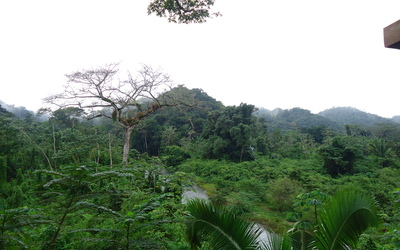 View of the rainforest canopy from one of the zip lining platforms.