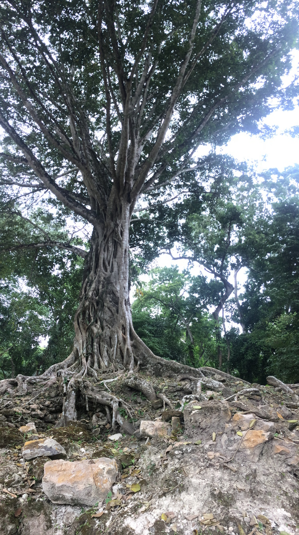 "A strangler fig devouring the ruins around it.<a href=""/reason/images/798950_orig.jpg"" title=""High res"">∝</a>"